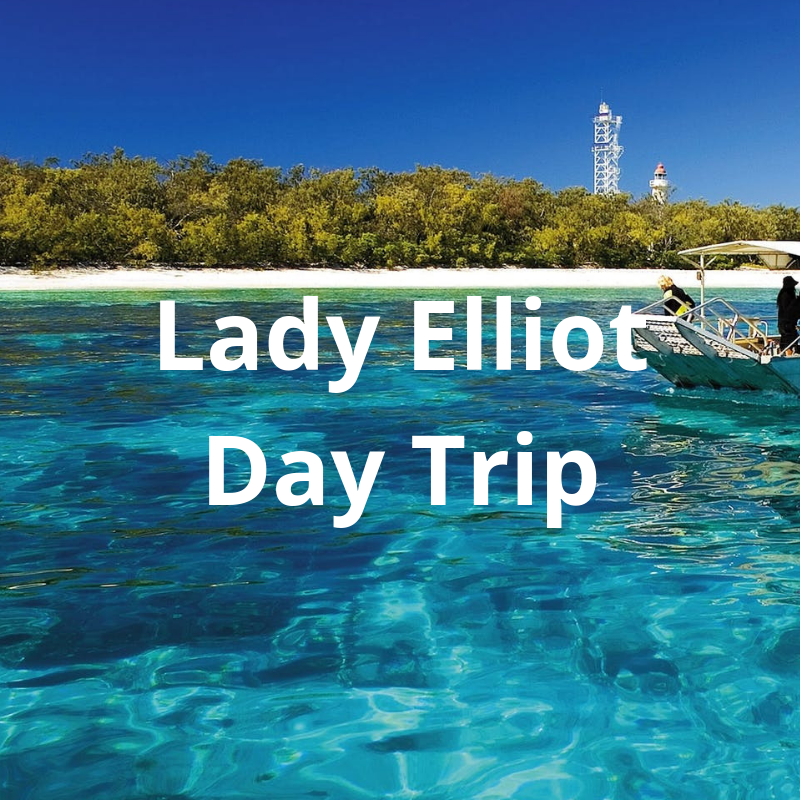 Lady Elliot Day Trip